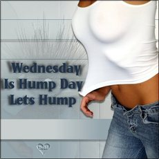 Wednesday is hump day lets hump
