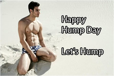 Happy Hump Day Let's Hump